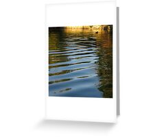 Water Hen Greeting Card