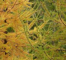 green and gold...autumn transitions by Darbs