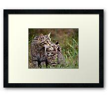 Big Cat, Little cat Framed Print