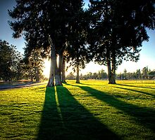 Sunset Behind the Trees by Arelle Hall