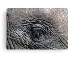 Elephant's Eye Canvas Print