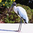 Stork poolside by ♥⊱ B. Randi Bailey