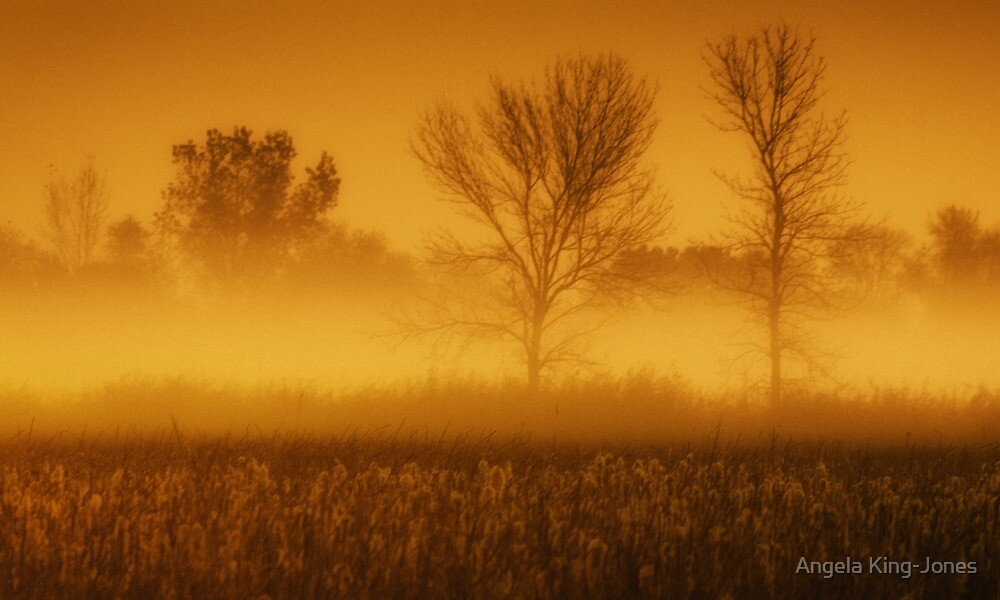 Autumn morning by Angela King-Jones