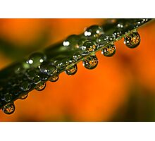 Marigolds trapped in raindrops Photographic Print