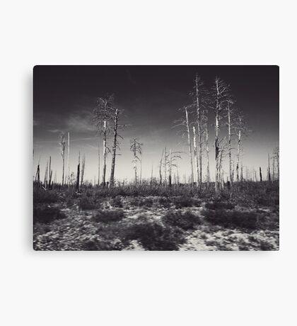 Burnt Landscape Canvas Print