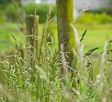 Weeds and wild hay by Sue Ratcliffe