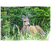 Wildlife in Waterton Lakes NP Poster
