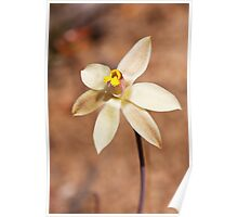 Fringed Sun Orchid (Yellow form) - Thelymitra luteocilium Poster