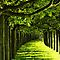 Roads or Paths that are covered with trees (see example)