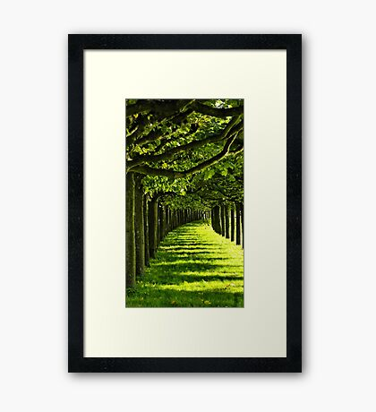 Green Allee Framed Print