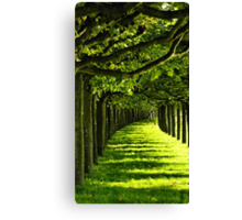 Green Allee Canvas Print