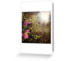 Hidden Pink Wildflowers Found By Sunshine Greeting Card