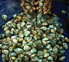 the shells by Dinni H