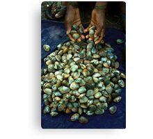the shells Canvas Print