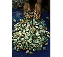 the shells Photographic Print