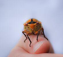 Spring Cicada by AnnabelHC