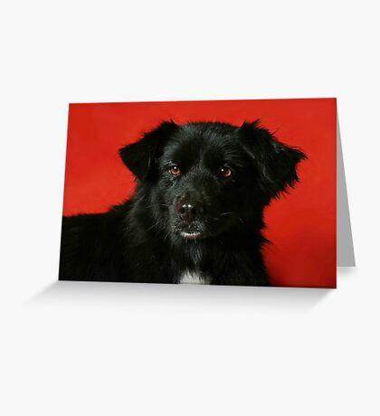 Daphne Greeting Card
