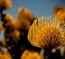 focal flower, ulladulla nsw by liam  glass