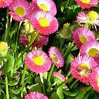Pink delicate flower garden by djackson
