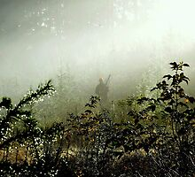 Hunting pheasants on a misty morning II by Alan Mattison