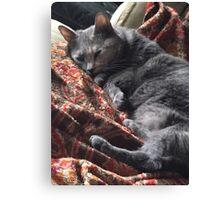 Sleepy Gray Cat Canvas Print