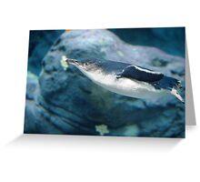 Penguin Swimming - Taronga Zoo Greeting Card
