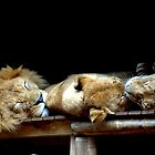 Never wake a Sleeping Lion by Alastair Faulkner