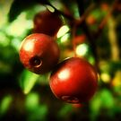 Autumn Berries © by Dawn Becker