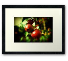 Autumn Berries © Framed Print
