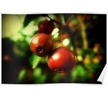 Autumn Berries © Poster