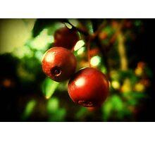 Autumn Berries © Photographic Print