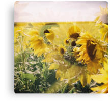 holga sunflowers Canvas Print