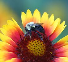 Colorful Flower and Bumble Bee by Terry Aldhizer