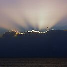 Fly the Rays by BK Photography