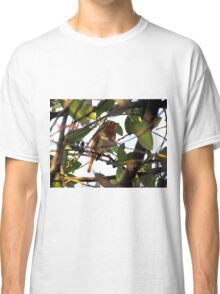 Robin in the branches of a tree Classic T-Shirt