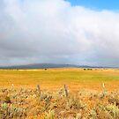Oregon Snowbow by Scott  Hafer