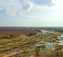 "AIRIAL VIEW - ELEPHANTS RIVER ""KRUGER NATIONAL PARK"" SA. by Magaret Meintjes"