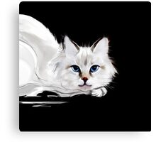 White and black cats Canvas Print