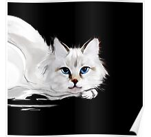 White and black cats Poster