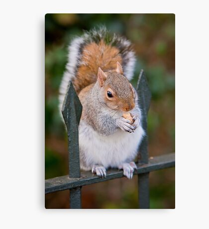 Squirrel of Hyde Park Canvas Print
