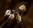 WINTER'S EMBRACE by Sandy Stewart