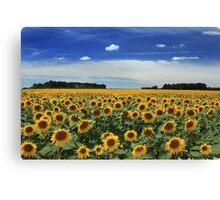 Sunflowers, Vienne Canvas Print
