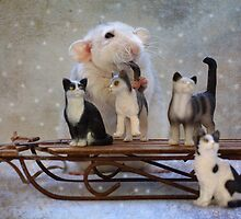 Rosie with her new sleigh by Ellen van Deelen