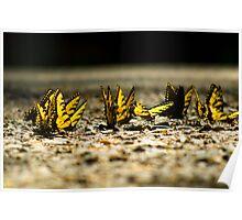 Butterflies on Asphalt Poster