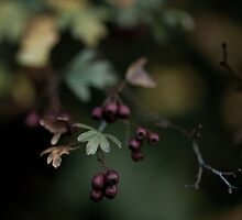 Autumn berries by Alice Kent