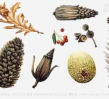 Natural objects - Autumn leaves, fir cones and fruit. by Helen Lush