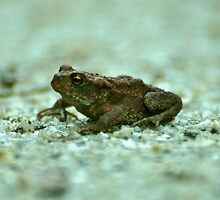 MR Toad by Russell Couch
