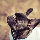 Mitchell the Frenchie Puppy by Leanne Graham