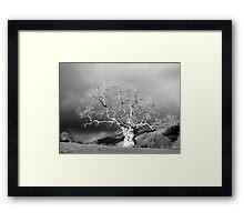 Ancient Tree b&w Framed Print