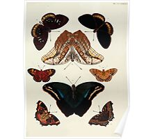 Exotic butterflies of the three parts of the world Pieter Cramer and Caspar Stoll 1782 V4 0413 Poster